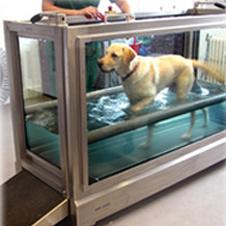 Hydro Physio для собак. Здесь можно создавать не только потоки воды, но и регулировать их температуру