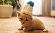 Котики и не только: 22 популярных героя Instagram
