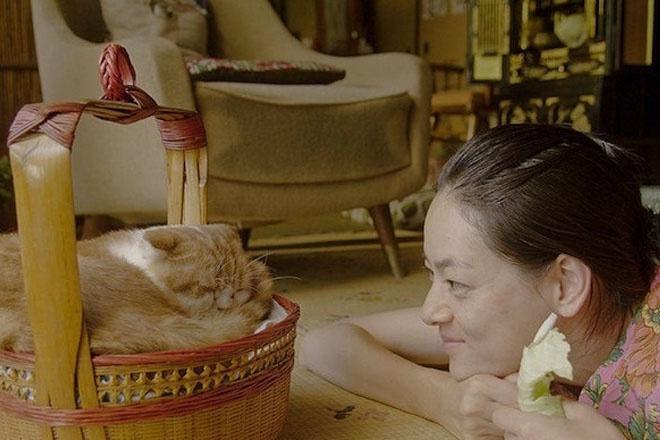 кадр из фильма «Кошка напрокат»