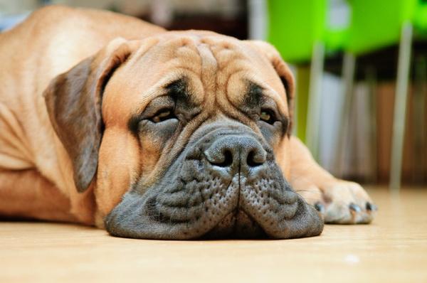 Собака скучает одна дома