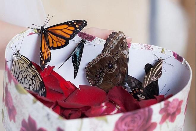 Магнитогорск, подарки, идеи для подарков, бабочки