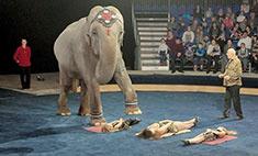 «Цирк огромных зверей»: 7 секретов нового шоу!