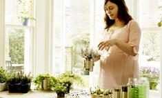 Как вырастить зелень на подоконнике: советы эксперта