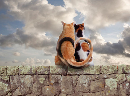 Кошки на каменной стене