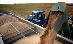 Россия втрое увеличит импорт зерна