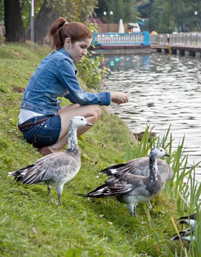 кормить птиц