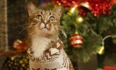Новогоднее чудо: фото под елочкой помогли бездомным котам найти хозяев