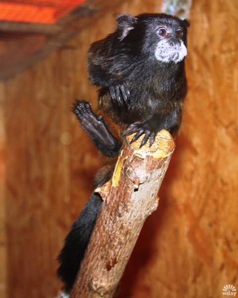 Обезьяна символ наступающего года, Казанский зооботсад фото