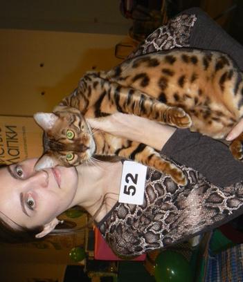 Воронеж, выставка кошек, кошки мира, породы котят