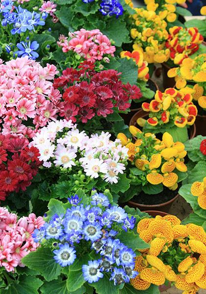 Ростов цветы, рассада, рассада цветов, рассада календарь, растения посадка, ярмарки 2015, кск экспресс