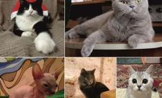 Топ пушистых: самые милые кошки Оренбурга!