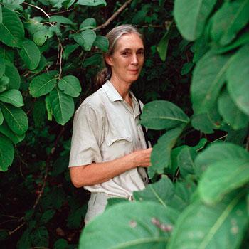 Джейн Гудолл (Jane Goodall), 2011