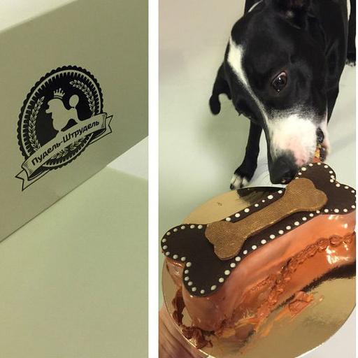 Сергей Лазарев открыл кондитерскую для собак «Пудель-Штрудель», новости