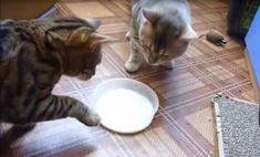 Ух ты! Вежливые котики из Красноярска покорили интернет