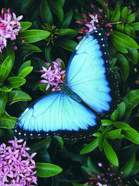 бабочки в подарок тропические бабочки тюмень