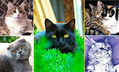 Пятничное мимими: 24 башкирских котика для хорошего настроения