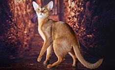 Топ самых необычных и красивых котиков Барнаула