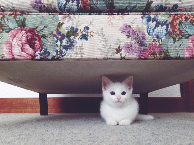 как дать котенку таблетку от глистов