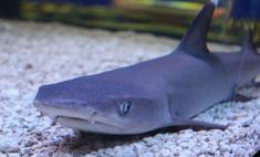 В Новосибирск прилетела акула! Смотри видео
