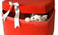 Топ-15 подарков, которые нельзя дарить на 14 февраля
