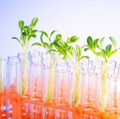Гидропоника – растения на воде: выращивание в домашних условиях