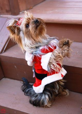 Одежда для собак, мода 2016