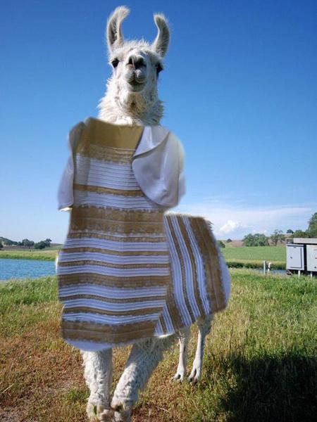 Какого цвета платье фотожаба