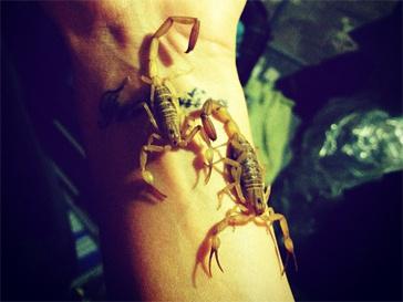 Алена Водонаева устроила игры со скорпионами.