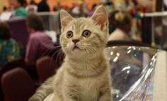 Пушистый антистресс: как подобрать кота под свой характер?