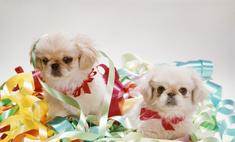 Маленькая собака для квартиры: топ-5 лучших пород