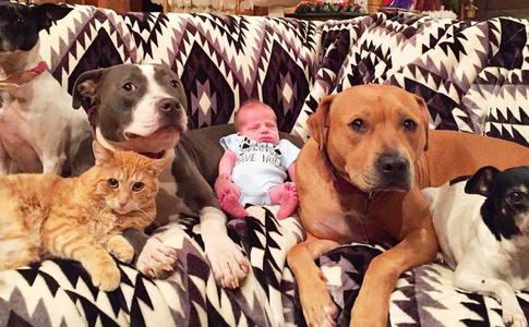 Так мило: кот и четыре собаки ухаживают за младенцем