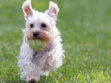 Хозяин нашел потерянную собаку через 7 лет