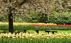 К 9 мая Москва будет усыпана цветами