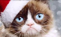 Звезды в шоке: угрюмый кот получает больше них