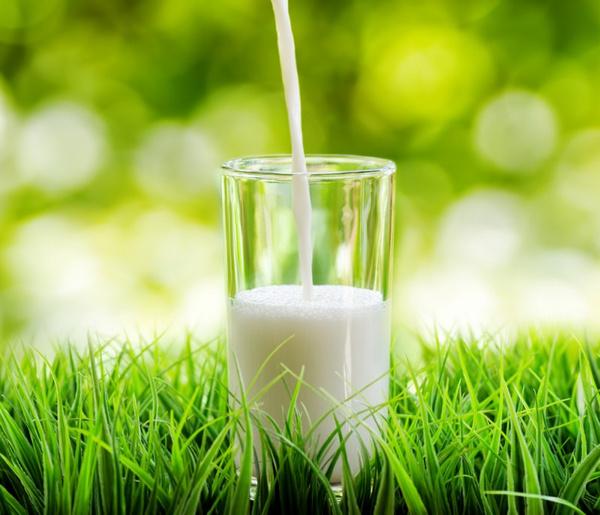 Пастеризованное молоко польза