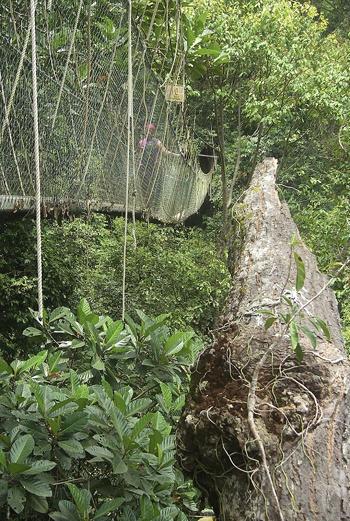 В национальном парке Малайзии (Taman Negara National Park) можно пройтись по 530-метровому мосту, висящему на высоте 40 метров над землей и полюбоваться джунглями. Правда, сейчас часть моста закрыта на ремонт.