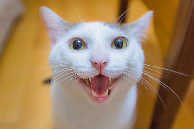 Если кошка хочет кота что она делает