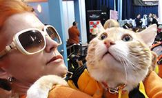 Кошачье счастье: истории спасения