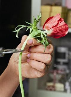 мастер-класс, валентинки, букеты, флористика, День всех влюбленных, День святого Валентина, подарки, анемоны, гортензия, Эксмо, декор, своими руками