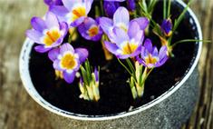 Топ-5 натуральных подкормок для домашних растений