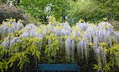 Как выбрать вьющиеся цветы для сада
