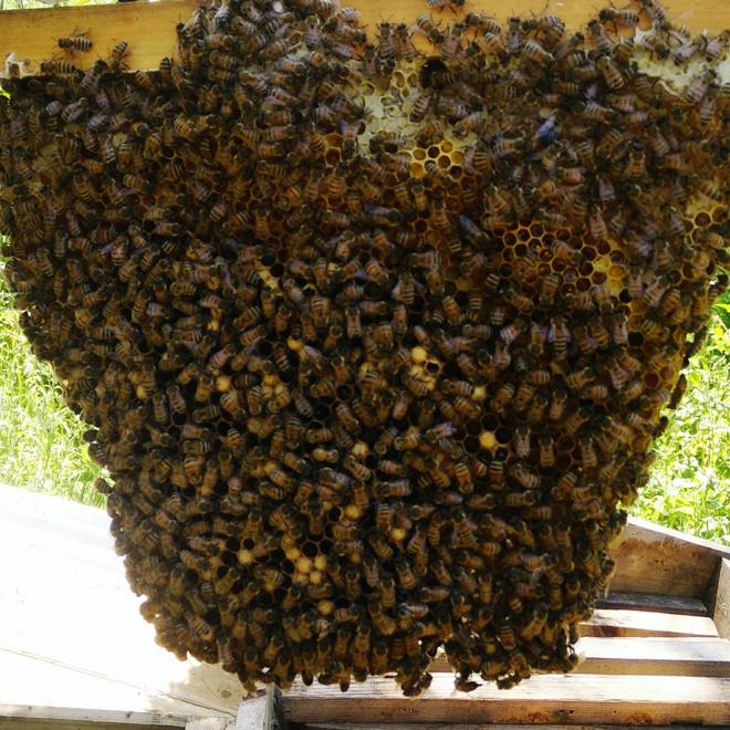 как избавиться от пчелиного гнезда