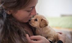 Милота дня: парень сделал предложение, подарив щенка