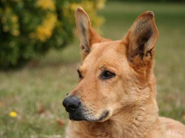 Собака по кличке Кейли номинирована на премию от Общества защиты животных