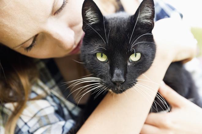 К чему сниться черный котенок и черная