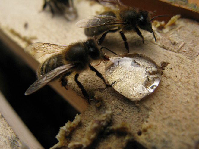 как правильно приготовить сахарный сироп для пчел