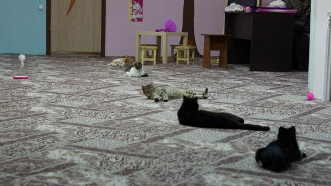 йога с котами