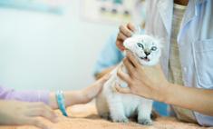 Безболезненное лечение питомца: как давать коту лекарство?
