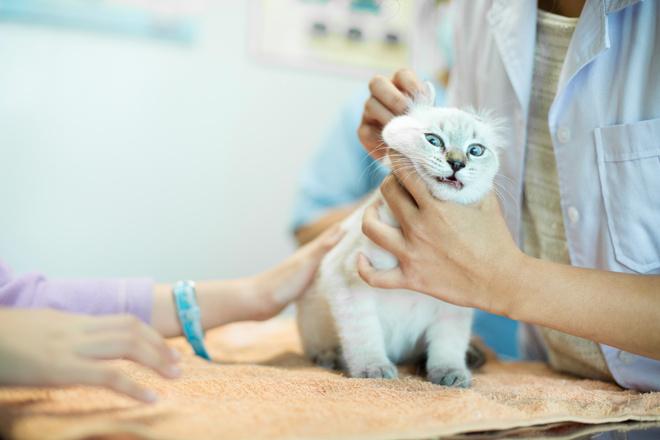 Как давать коту лекарство