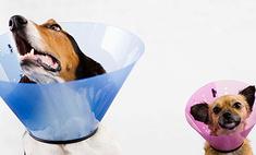 За неправильный выгул собак будут сажать на 15 суток